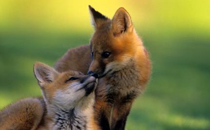 Israel Reconsidering Fur Ban