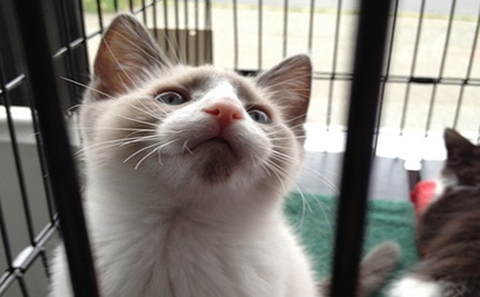 Kittens Get Reprieve from Medical Training