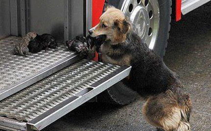 Puppies Saved from Burning House