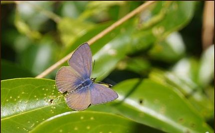 Mutant Fukushima Butterflies Reveal Effects of Radiation