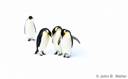 Asia Has an Important Role to Play in Protecting Antarctica's Wild Ocean