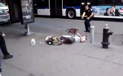 NYPD Shoots Dog While Her Owner Has a Seizure