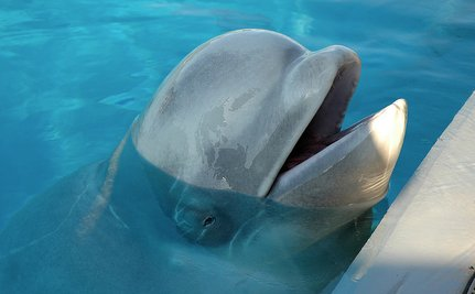 Blinded Seals, Battered Baby Whales: Nobody Loves Marineland