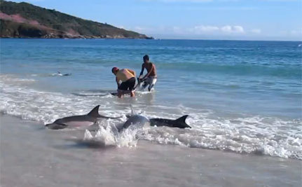 30 Stranded Dolphins Saved; Others Not So Lucky