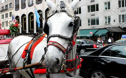 Carriage Horse Runs Loose in Traffic in New York City