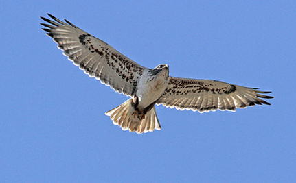 Wind Energy Company Will Move Turbines To Protect Raptors (Video)