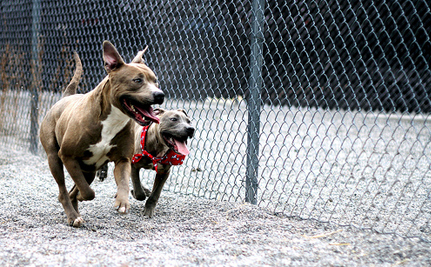 Boston Officials Will Fight to Keep BSL