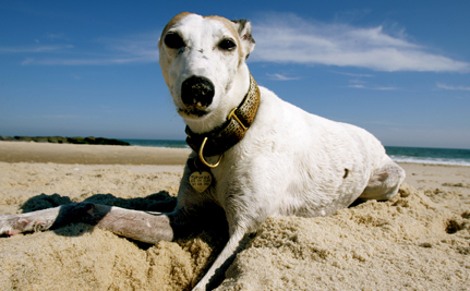 Humane Advocates are Winning the Debate Over Greyhound Racing