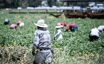 No Day of Rest for America's Farmworkers