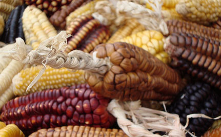 Who Stole Mexico's Corn — and Jobs?