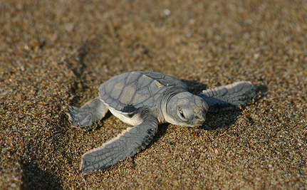 Heroic Volunteers Spend Night and Day Saving Baby Sea Turtles