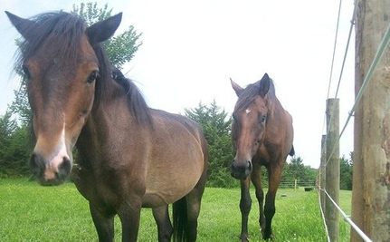 Will Horses Stop Being Killed in New Jersey? It's Up to Chris Christie