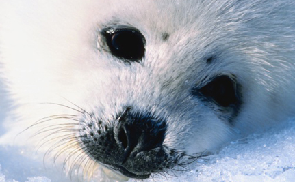 Care2 Success! Seal Pups Saved from Certain Death