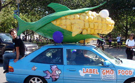Rats Eating GMO Corn Get Tumors, Die Early