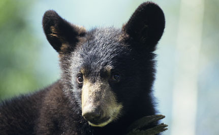 Success! Global Vote Shuts Down Bear Bile Industry