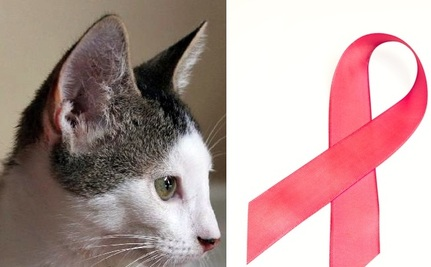 How a Cat Helped Heal My Breast Cancer