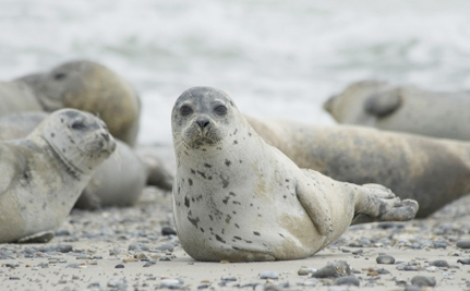 China to Canada: We Won't Be a Dumping Ground for Slaughtered Seals