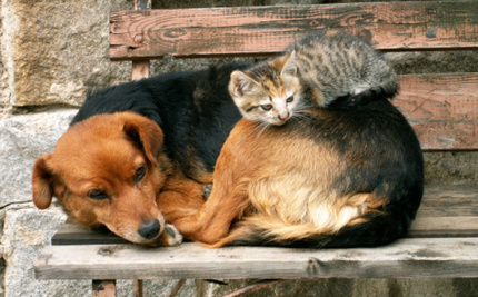 Why Environmentalists Should Care about Pet Euthanasia