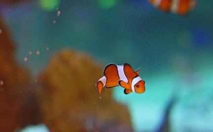 Oceans Get Hotter, Fish Shrink