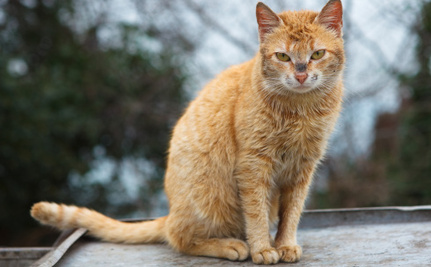 A Tale of Two Kitties: Changing Communities For Feral Cats