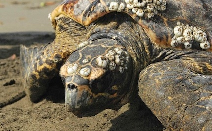 International Turtle Experts Search For the Elusive Hawksbill