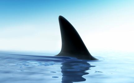 Success! Costa Rica Bans Shark Finning
