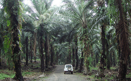 After All That Rainforest Destruction, Palm Oil Is Not Even Healthy for You
