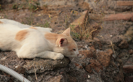 Curious Cat Discovers 2,000-Year-Old Catacomb