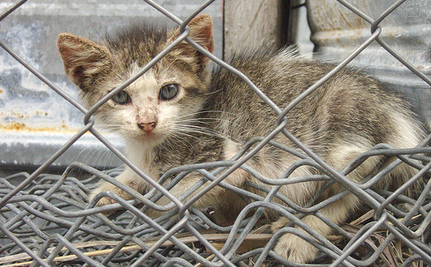 11-Year-Old Boys Placed On House Arrest For Stoning Kittens
