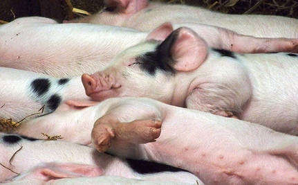 Supermarket Chain Ends Factory Farming One Year Ahead of Schedule