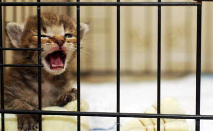 Washington University Under Fire for Torturing Cats