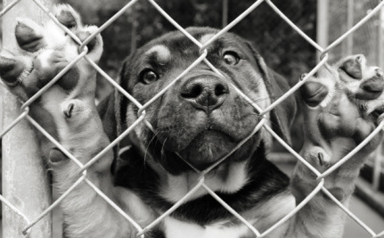 Gas Chambers Are the Heartless End for Many Cats and Dogs