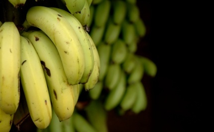 Going Bananas Over Climate Change? You Might Have To