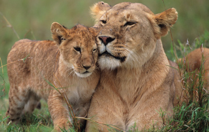 The Horrors and Dangers of Serving Lion on a Bun