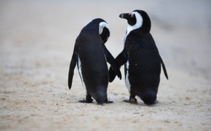 Gay Penguins Make The Austin School District Freak Out