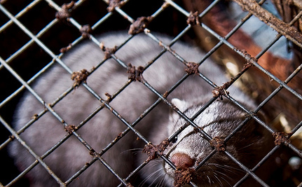 Caged Animals Get Really, Really Bored