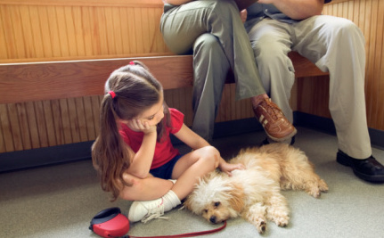 6 Ways to Cope With the Loss of a Pet