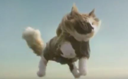 """Skydiving"" Cats Cause Outrage (Videos)"