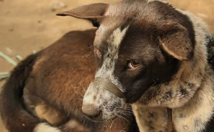 Video Exposes Shocking Dog Meat Industry In Bali