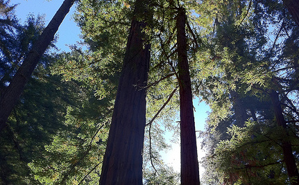 A Rare Chance to Save Acres of Redwood Trees