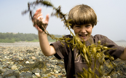5 Reasons to Eat Your Seaweed