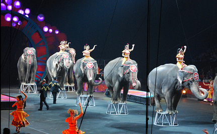Elephants Go First: LA Takes Steps to Stop Circus Cruelty