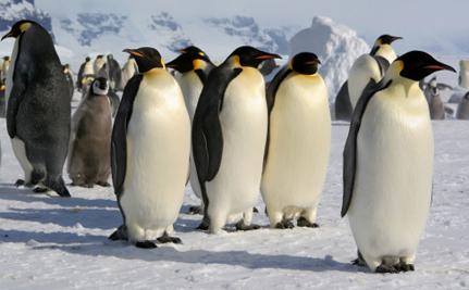 Giant Penguin Fossils Found In Antarctica