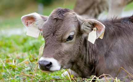 Polish Court Bans Religious Animal Slaughter, But Victory Could Be Short-Lived
