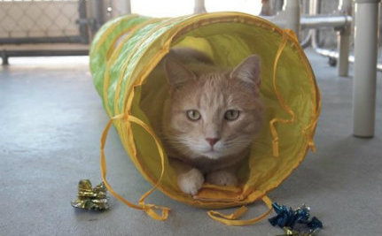 Blind Cat Sanctuary Offers Cage-Free Oasis