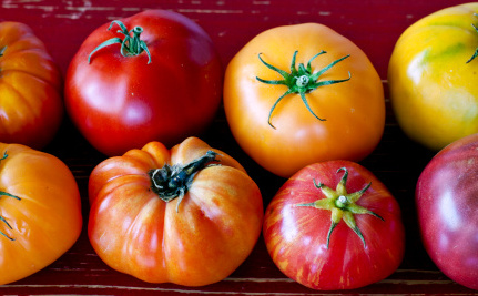 It's Here! The Flavorful, Sustainable Winter Tomato