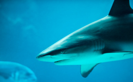 EU Eliminates 'Special Permits' For Shark Finning