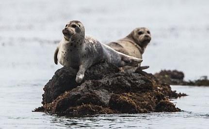 Success! West Coast's First Marine Wilderness Secured