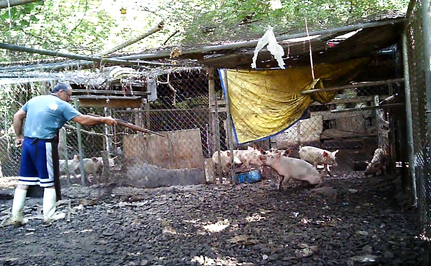 Backyard Butchers Turn One Corner of Florida Into Hell for Animals