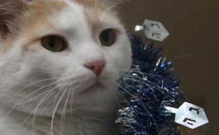8 Cute Cats Celebrating Hanukkah